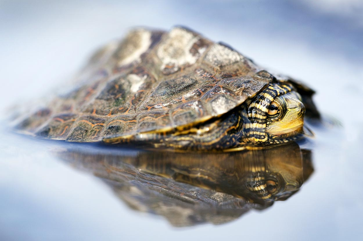 Map Turtle Reflections